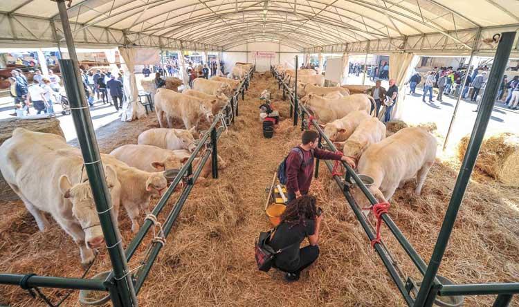 Calendario Fiere Agricole 2020.Agriumbria Bastia Umbra Pg Dal 29 Al 31 Marzo 2019